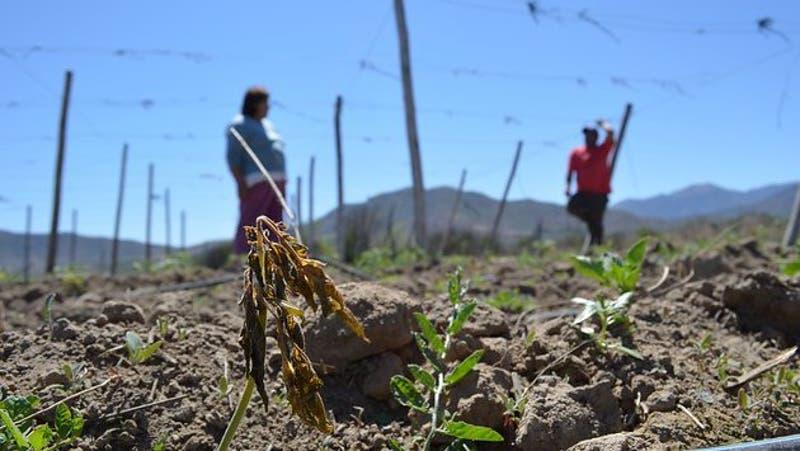 Declaran zona de emergencia agrícola en ocho comunas de Ñuble por escasez hídrica