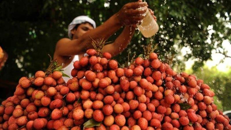 El lichi (Litchi chinensis) o lichí es un árbol frutal tropical originario del sur de China.