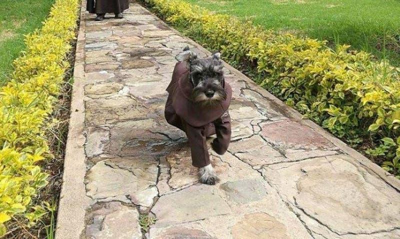 Fray Bigotón: el perro que se convirtió en monje franciscano en Bolivia