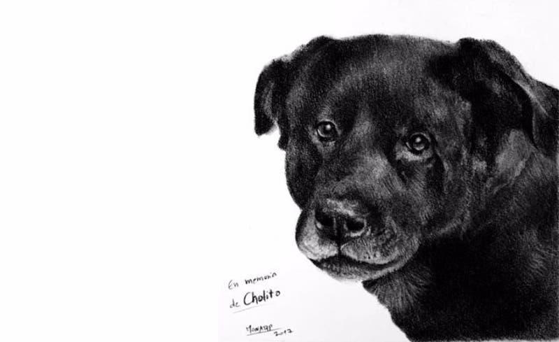 Cholito: La agresión que reactivó el debate de la ley de tenencia responsable de mascotas