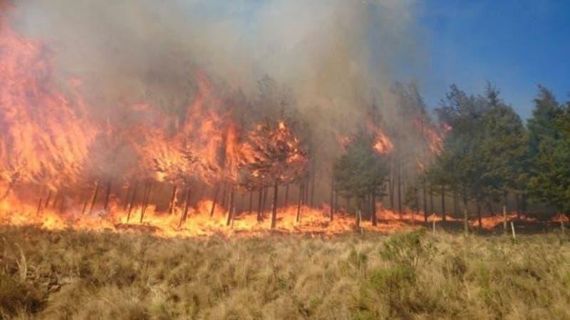 Incendio forestal en Bolivia cobra la vida de dos personas.