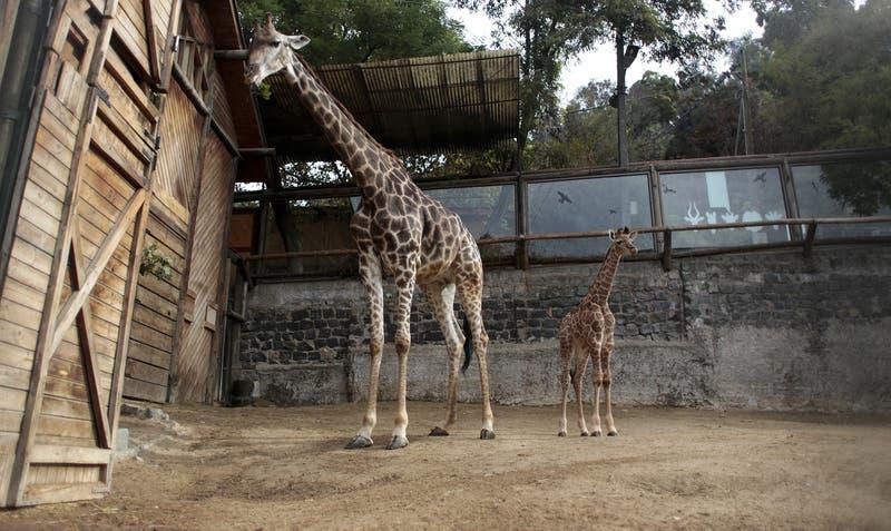 La completa reforma al Zoológico Metropolitano