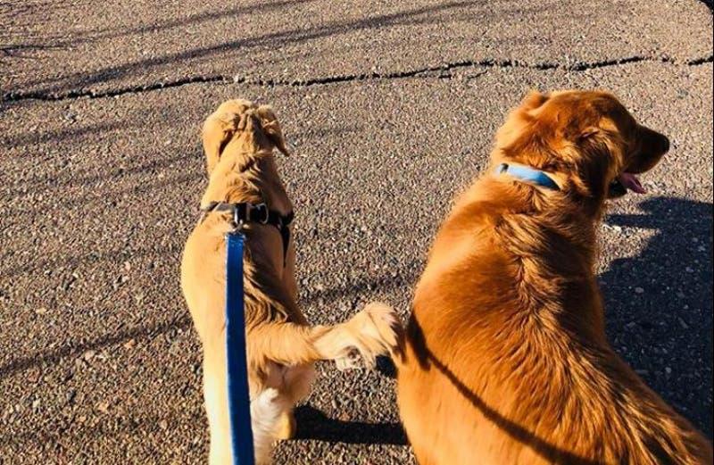 [FOTOS] Mi dulce héroe: perro recibe mordida de serpiente al defender a su dueña