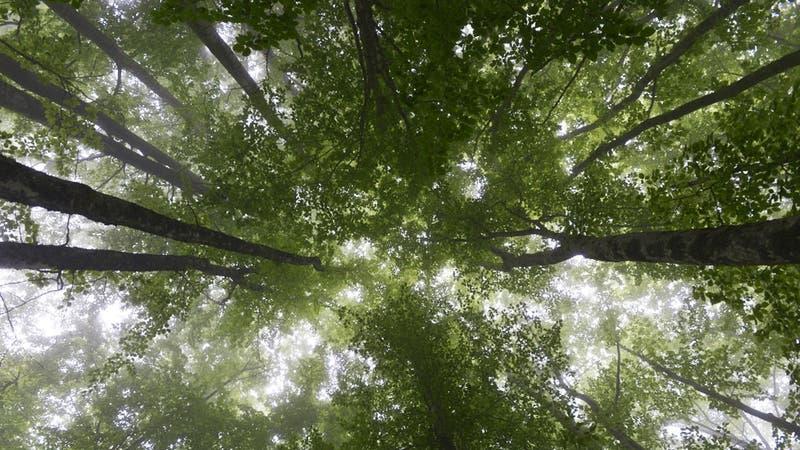 Estudio afirma que un billón de árboles podrían combatir el cambio climático