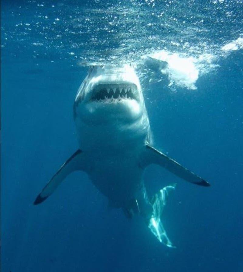[VIDEO] Buzo graba momento exacto en que tiburón intentó morder su cámara en México