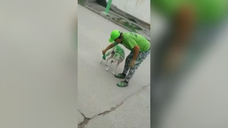 Maltrato animal: militantes pintan a un perro con los colores de un candidato electoral