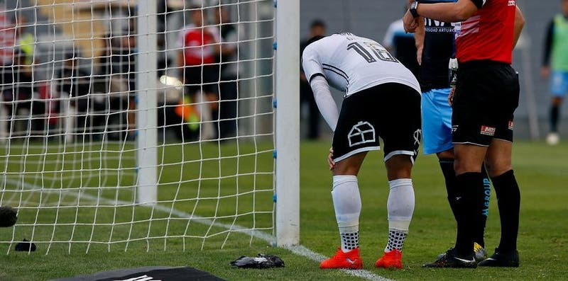 Paloma recibe fatal pelotazo en partido de Colo Colo
