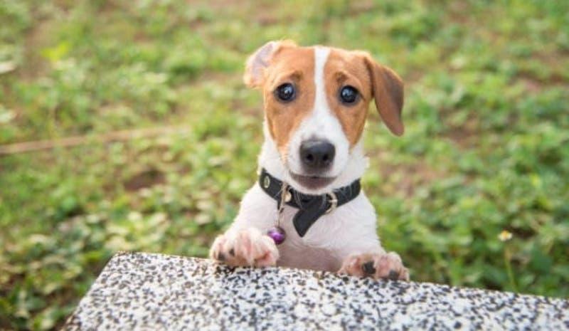"""""""Sin corazón"""": Familia intenta vender a su perro por una razón que genera repudio en redes sociales"""