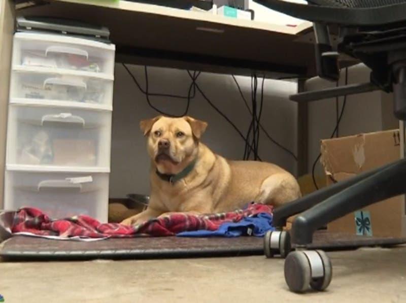 [VIDEO] Conmovedor: Perro roba ropa en un refugio de animales para no sentirse solo