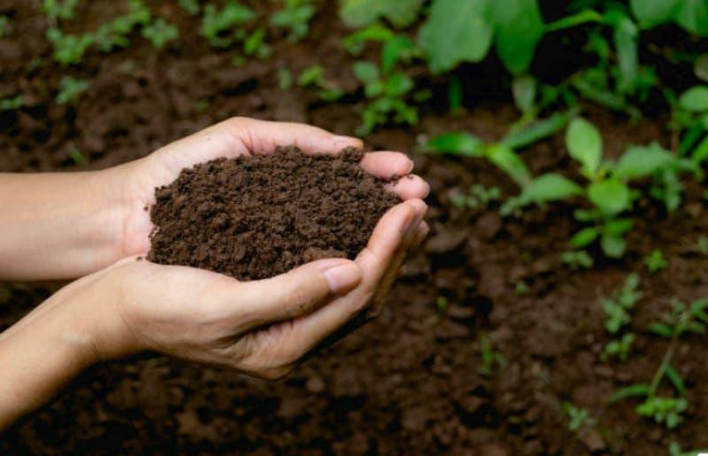 ¿Cuánto contamina un cadáver? Especialista analizan cuál es la sepultura más ecológica