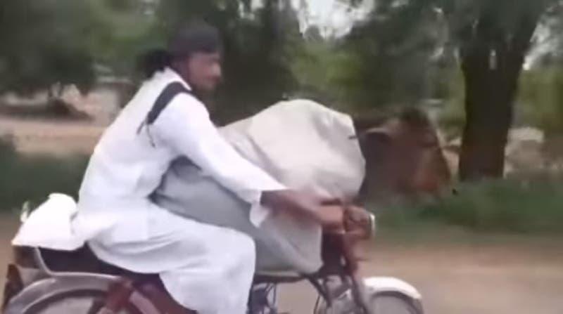 [VIDEO] Hombre que pasea a una vaca en moto se vuelve viral en redes sociales