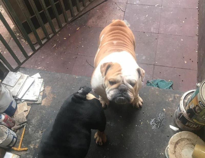 Detienen a hombre que mantenía un criadero ilegal de perros y gatos en Providencia