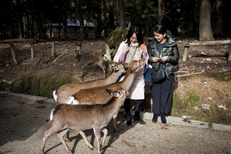 Nueve ciervos mueren en un santuario japonés por comer bolsas plásticas