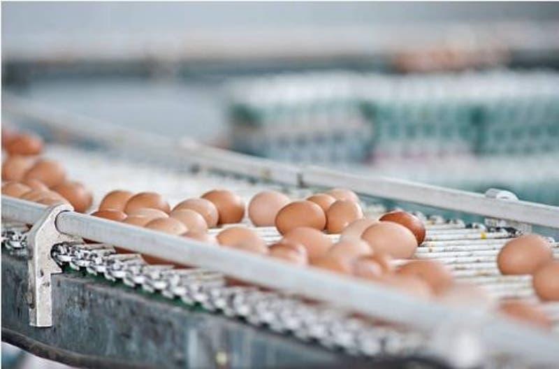 """Huevos """"éticos"""" podrían salvar a millones de pollitos de la muerte"""