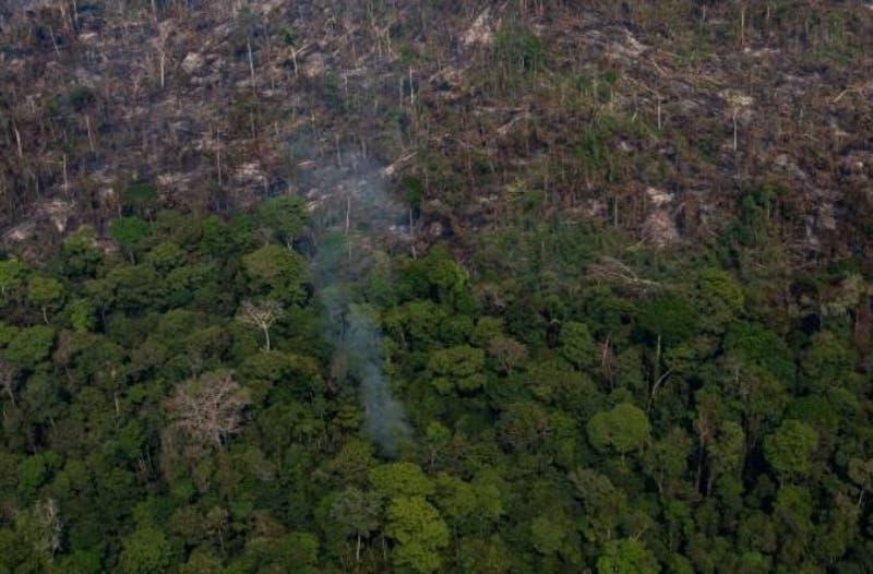 Bosques de América Latina: deforestación letal