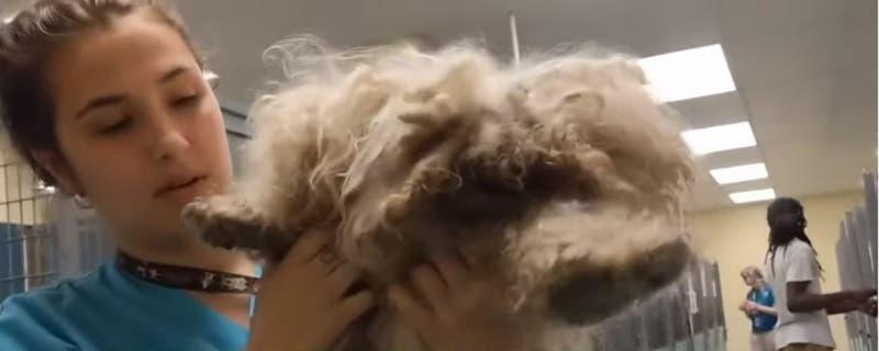 """[VIDEO] """"De los casos más impactantes"""": El radical cambio de un perro que fue maltratado por años"""