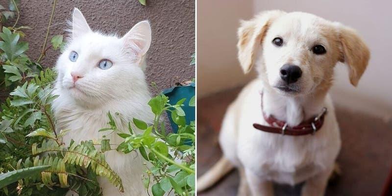 ¿Cuántos perros y cuántos gatos hay registrados en Chile?: Primer catastro revela mayoría canina