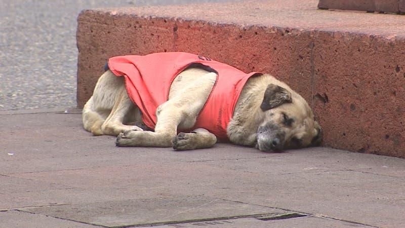 """Cien días de pena para los autores del crimen de """"Cholito"""", el perro que inspiró la ley"""