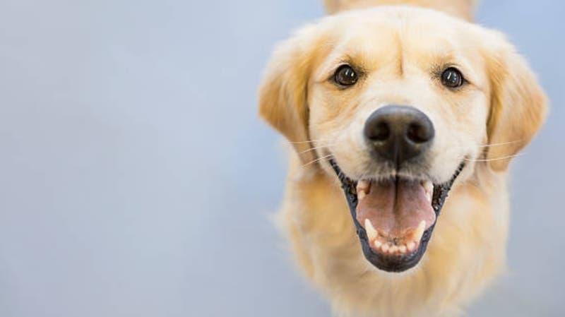 Casa en Londres y sueldo millonario por cuidar dos perros