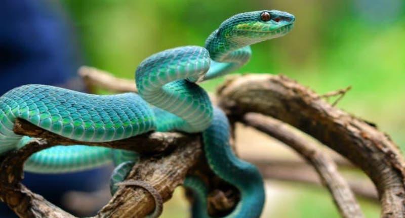 Niño se ve forzado a quitarse la polera antes de viajar porque tenía la imagen de una serpiente
