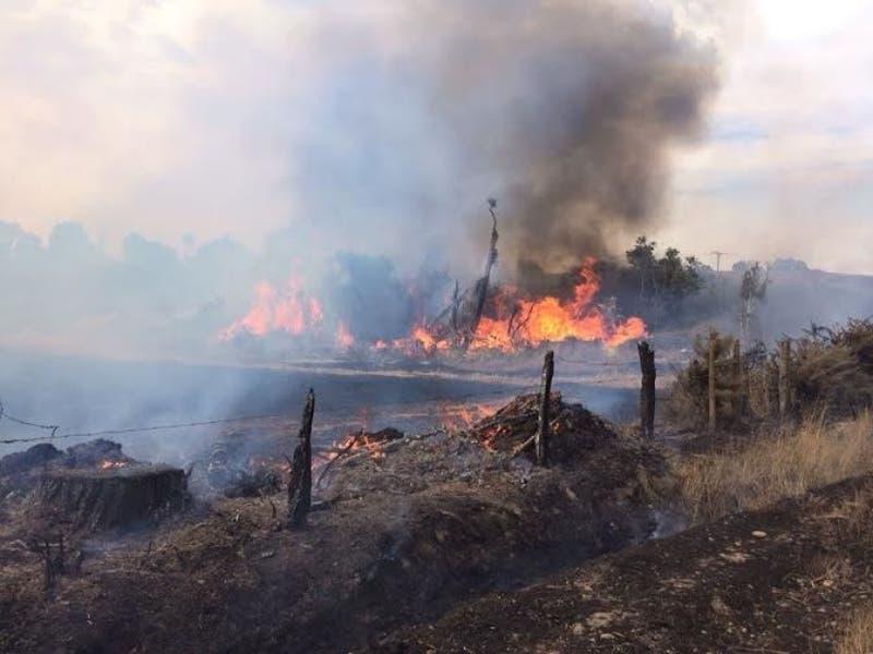 Onemi declara alerta roja en Padre Las Casas por incendio forestal en la región de La Araucanía