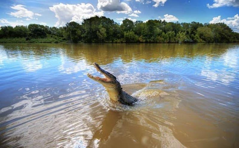 [VIDEO] El momento exacto en que un cocodrilo salta del agua para atacar a un dron que volaba bajo