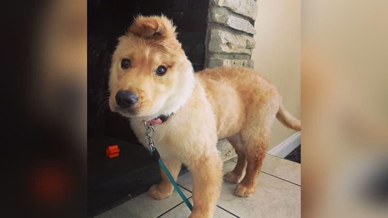 """""""La perrita unicornio"""": La cachorra que tuvo un accidente al nacer y la dejó con solo una oreja"""