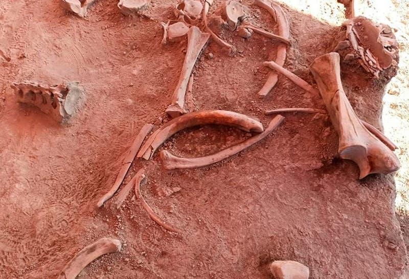 [FOTOS] Descubren restos de cerca de 60 mamuts de hace más de 12 mil años