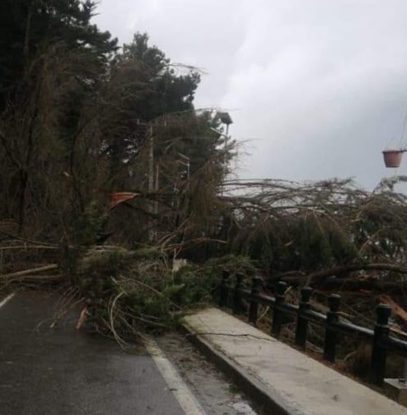 Especie de tornado en el Maule provocan caída de árbol sobre tendido eléctrico