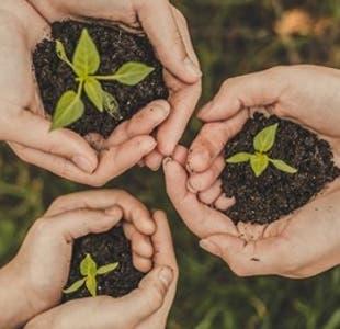 Sustentables y prácticos: El proyecto que revolucionará los envases en Chile