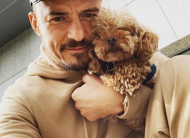 La gran muestra de amor de Orlando Bloom hacia su perrito tras confirmar su muerte