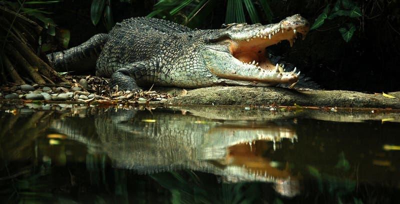 Mujer arriesgó su vida y la de su hijo para recuperar billetera: entró a un estanque de cocodrilos