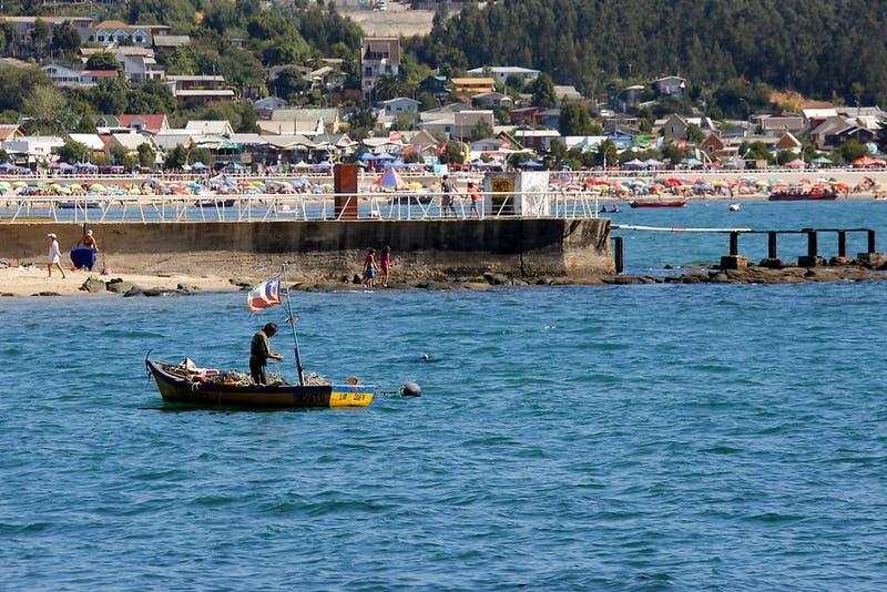 TC rechaza recurso de pesquera contra Ley de la Jibia que privilegia la pesca artesanal