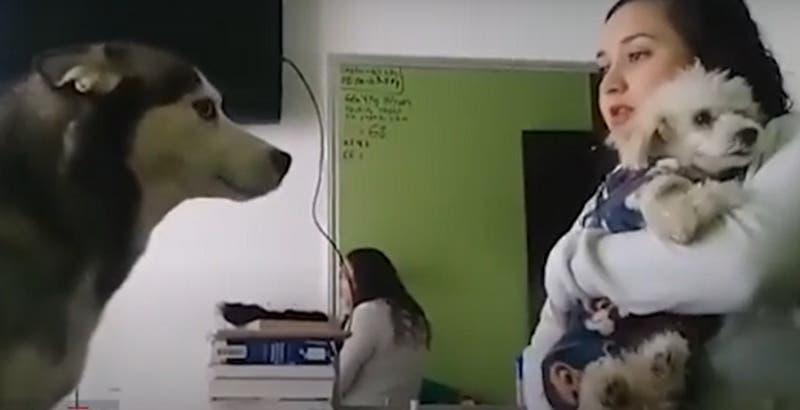 """[VIDEO] """"No debes andar pegándole"""": Perrito le """"pide perdón"""" a otro can en tierno video viral"""