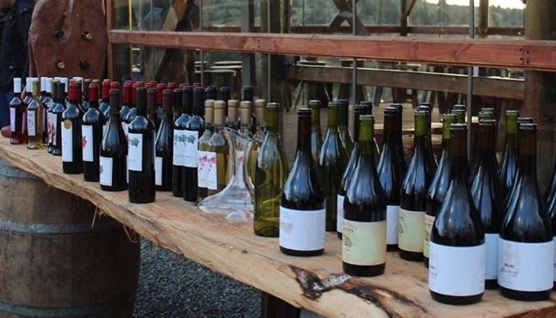 Empresa familiar de la región de Ñuble logra cruzar la frontera con su vino pipieño