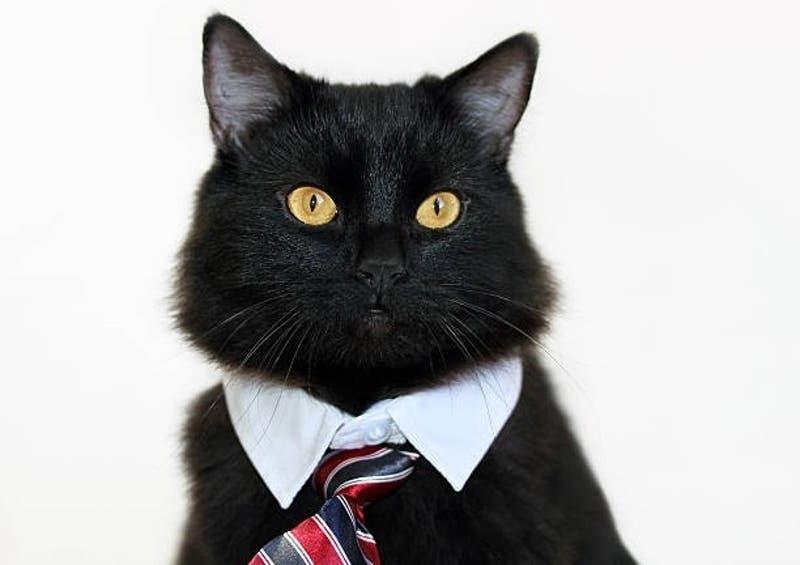 """Gato es """"contratado"""" como guardia de seguridad de un hospital tras meses yendo al edificio"""