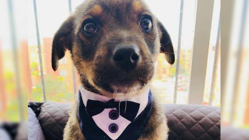 La conmovedora historia de 'Vicente', el perrito que dejaron plantado el día de su adopción