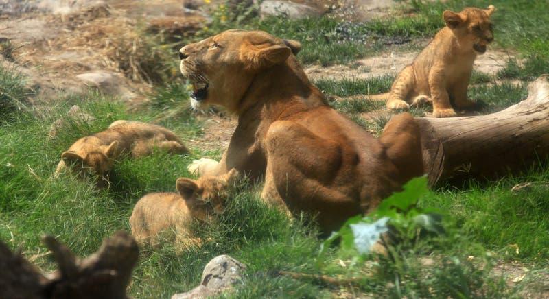 Zoológico Nacional fija fecha y horario de apertura tras seis meses de cierre