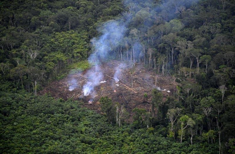 Cerveza brasileña variará su precio de acuerdo a la evolución de la deforestación en la Amazonía
