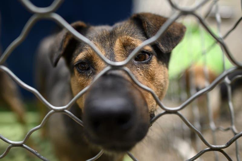 """""""Fue como un infierno"""": Encuentran miles de perros y gatos muertos dentro de cajas en un depósito"""