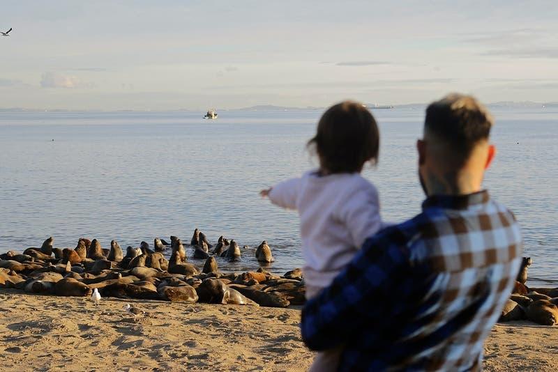 Sernapesca llama a respetar distancia con animales marinos: multas llegan hasta los $15 millones