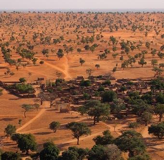 El increíble hallazgo de cientos de millones de árboles en el desierto del Sahara