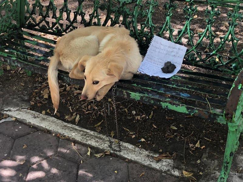 """""""Por favor adóptalo y cuídalo bien"""": abandonan a perrito en una banca en Ciudad de México"""