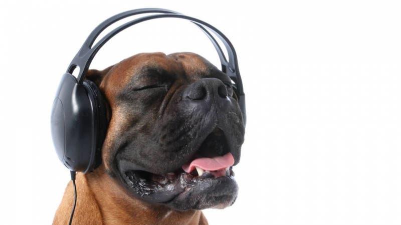 Municipio español destinó más de 6 millones de pesos para realización de concierto para perros