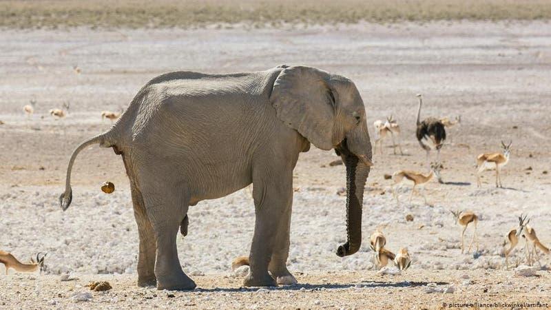 Namibia pone a la venta 170 elefantes debido a la sequía y el aumento de su población