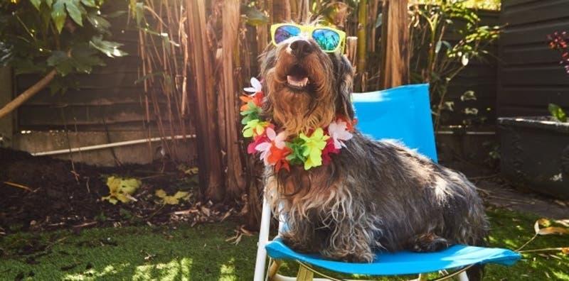 5 consejos para refrescar a tu perrito en grandes olas de calor