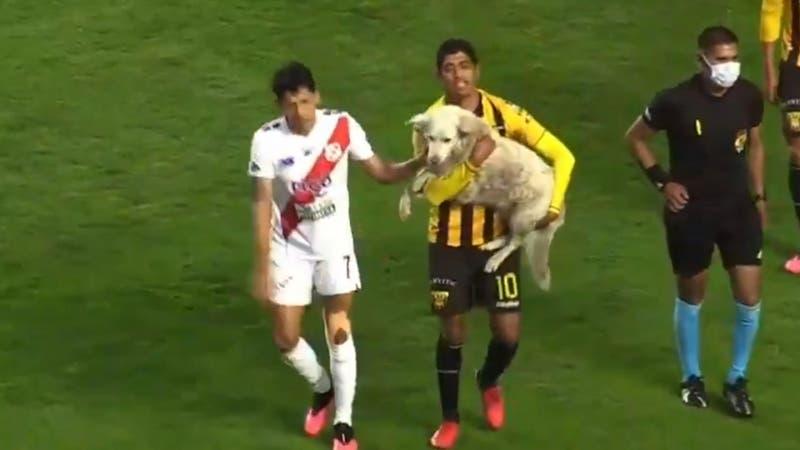 [VIDEO] Perro interrumpió partido de fútbol en Bolivia: Se robó las cámaras... ¡y un zapato!