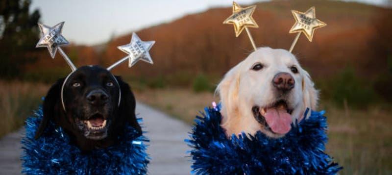 [VIDEO] Tips para cuidar a tus mascotas durante las celebraciones de fin de año