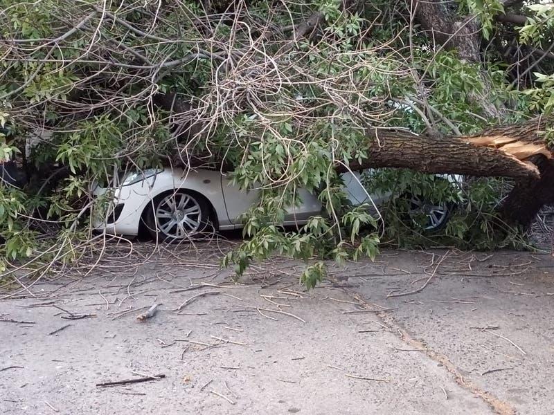 Enorme árbol cae sobre vehículos en la comuna de Providencia