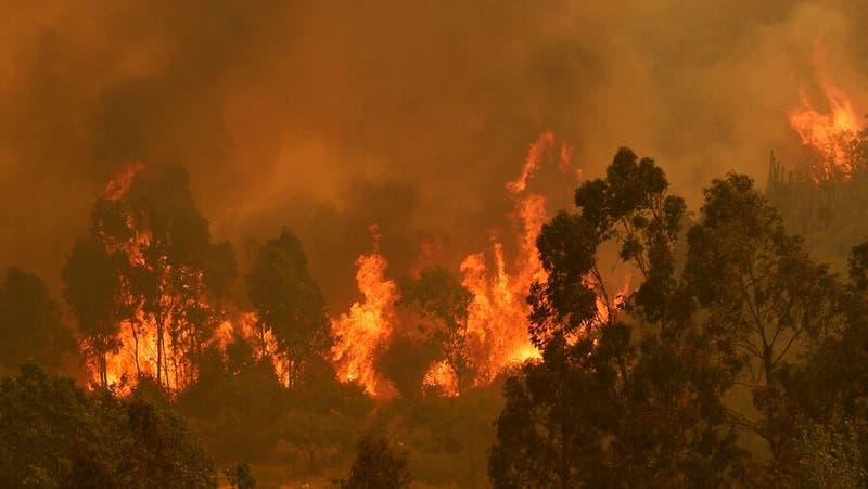 Gianfranco Marcone explica las condiciones del incendio forestal de Quilpué